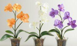 Содержание орхидей зимой: несколько полезных советов