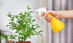 7 ошибок, которые вы делаете в уходе за своими Комнатными Растениями, не зная об этом