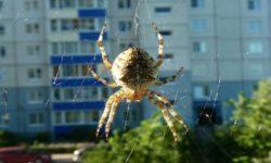 Почему нельзя трогать пауков, живущих у вас в доме.