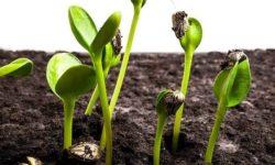 Недорогие средства для лучшей всхожести семян