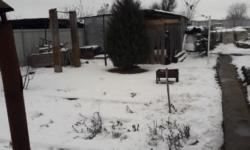 Растения в саду, которым снег может навредить