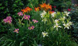 Топ 5 Уличных Цветов, которые цветут все Лето. Создайте незабываемую клумбу в этом году