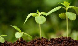 """Витамины группы """"В"""" для растений"""
