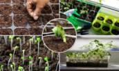 Что сеять в феврале (да, пора!) на рассаду: не опоздаем и не поспешим ✅ Список цветов и овощей