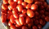 Для рассады томатов, перца и огурцов грунт нужен разный