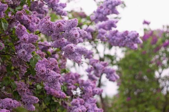 Топ 5 Самых неприхотливых Декоративных кустарников, специально для тех, кто хочет иметь Изумительно красивый Сад