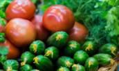 Желанные гости на моём огороде, радуют достойным урожаем вкусных, ранних плодов