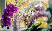 Как выбрать горшок для орхидеи, чтобы она была здоровой и цветущей: делюсь 4 пунктами ✅